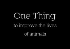One Thing to Improve the Lives of Animals (Compilation)